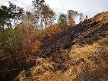 Jungle brûlée et érosion du sol ensuite d'une saison sèche de mousson photo libre de droits
