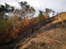 Jungle brûlée et érosion du sol ensuite d'une saison sèche de mousson photo stock