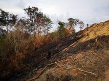 Jungle brûlée et érosion du sol ensuite d'une saison sèche de mousson photos stock