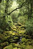 Jungle in Brazil Stock Photography