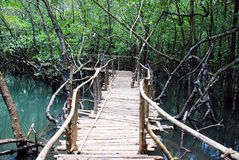 Jungle Bridge. Enter a Beautiful Jungle Bridge royalty free stock image