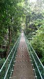 Jungle bridge in Roatan. Suspension bridge in Honduras Stock Images