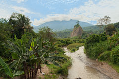 In the Jungle. Bukittinggi. Sumatra. Indonesia Stock Image