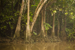 Jungle Buttresses Along Riverbank with Partial Reflection Royalty Free Stock Images