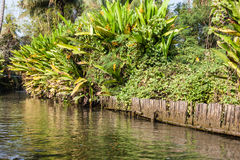 Jungle Canal Royalty Free Stock Image