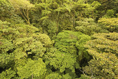 Jungle Canopy. This is the endangered canopy of an original central american rain forest with very complex vegetation Royalty Free Stock Image