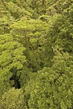 Jungle Canopy Royalty Free Stock Images