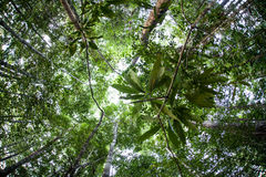 Jungle Canopy in Indonesia Stock Photos