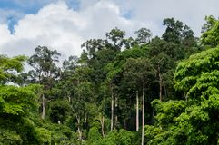 Jungle canopy in Khao Lak Stock Photo & Jungle Canopy Digital Painting Stock Illustration - Illustration ...