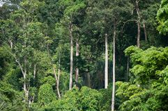 Jungle canopy in Khao Lak Stock Image