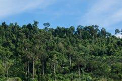 Jungle canopy in Khao Lak Royalty Free Stock Photo