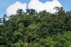 Jungle canopy in Khao Lak Stock Photo