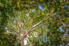 Jungle Canopy Royalty Free Stock Photo