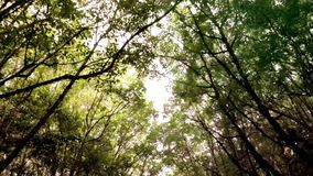 Jungle Canopy POV View Through stock footage