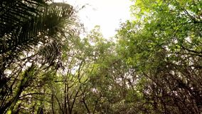Jungle Canopy POV View Through Royalty Free Stock Photography