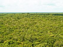 Jungle Canopy Top View royalty free stock photos