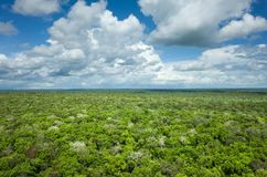 Jungle Canopy View Stock Photo