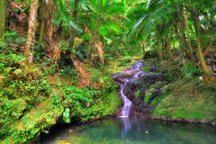 Jungle cascade. Small cascade in El Yunque national forest, Puerto Rico Stock Photos