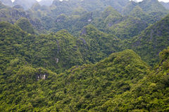 Jungle in Cat Ba National Park Stock Image