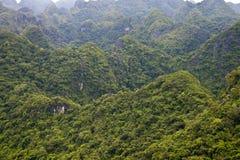Jungle in Cat Ba National Park. In Vietnam Stock Image