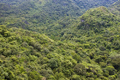 Jungle in Cat Ba National Park Stock Images