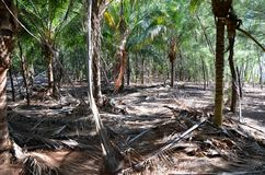 Jungle in Cayo Jutías Stock Photo