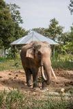jungle chitwan du Népal de paysage asiatique sauvage d'éléphants près bonbon lourd du soleil de ressort de l'Asie à personnes for Images stock