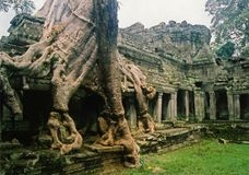 Jungle city angkor wat temple ruins Cambodia Royalty Free Stock Images