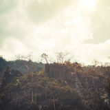 Jungle in cliff - tropical background Royalty Free Stock Photo