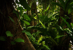 Jungle. Color  view of nice color misty  tropical jungle Royalty Free Stock Image