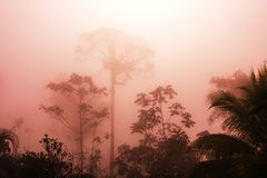 Jungle in Costa Rica. Misty Rainforest in Costa Rica, Central America royalty free stock images