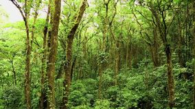 Jungle in Costa Rica stock footage