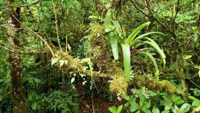 Jungle in Costa Rica stock video footage
