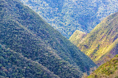 Jungle Covered Hills Stock Image