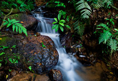Jungle creek Royalty Free Stock Photography