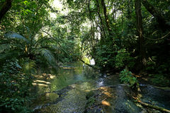Jungle Creek a stream in the rainforest Stock Image