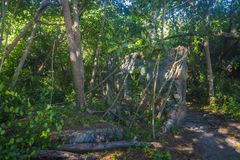 Jungle on Curieuse island, Seychelles Royalty Free Stock Images