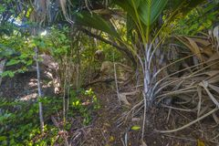 Jungle on Curieuse island, Seychelles Royalty Free Stock Photo