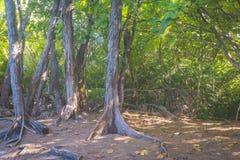 Jungle on Curieuse island, Seychelles Stock Photo