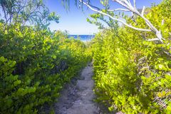 Jungle on Curieuse island, Seychelles Stock Image