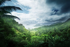 Jungle d'île des Seychelles Image stock