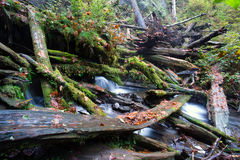 Jungle de Forest Stream Fallen Logs Woods de pluie photo stock