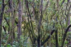 Jungle de La Gomera Photos stock