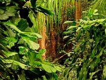 Jungle de Leid Photo libre de droits