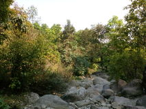 Jungle de montagne Photos stock
