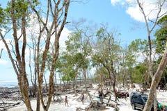Jungle de seco de Mangue image stock