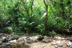 Jungle. Dense jungle and small river Stock Photography