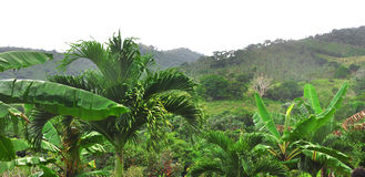 Jungle at Dominican Republic Royalty Free Stock Image