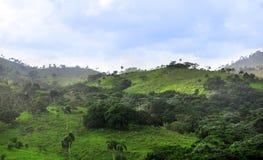 Jungle at Dominican Republic Stock Photo