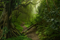 Jungle du Népal Image stock